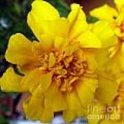 Autumn Marigold 2 Poster