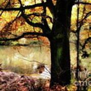 Autumn Oak Tree Poster