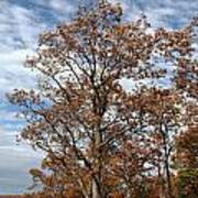 Autumn Oaks White Clouds Poster