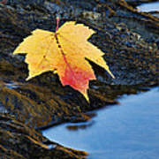 Autumn On The Tellico River - D004558 Poster