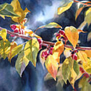 Autumn Plums Poster by Sharon Freeman