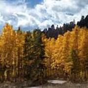 Autumn Splendor Poster by Carol Cavalaris