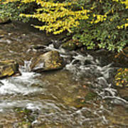 Autumn Stream 6149 Poster