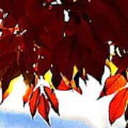 Autumn Sun Glory Poster