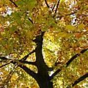 Autumn Sun Poster by Karen Grist