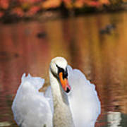 Autumn Swan Poster by Leslie Leda