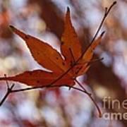 Autumn Swing Poster