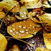 Autumn Tears Poster