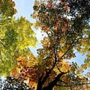 Autumn Trees Low-angle Poster