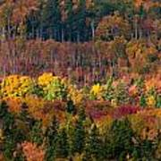 Autumn Trees Panorama Poster by Matt Dobson