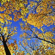 Autumn Treetops Poster