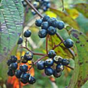 Autumn Viburnum Berries Series #2 Poster