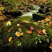 Autumn View Shows Fallen Leaves Poster