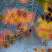 Autumn Web Poster