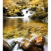 Autumnal Stream Poster by Mal Bray