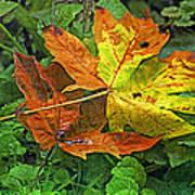 Autumn's Gift Poster