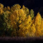 Autumn's Last Hurrah Poster