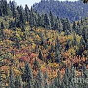 Autumns Palette Poster