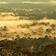 Awakening Forest Poster