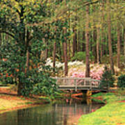 Azaleas And Footbridge Poster