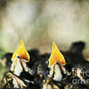 Baby Birds Poster by Darren Fisher