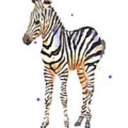 Baby Zebra Nursery Animal Art Poster