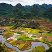 Bac Son Rice Field Poster