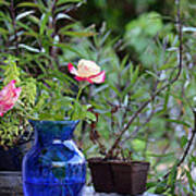 Back Yard Roses Poster