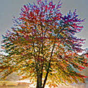 Backlit Maple In Autumn's Light Poster