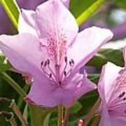 Backlite Flower Poster