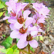 Backyard Blooms Poster