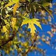 Backyard Leaves Poster