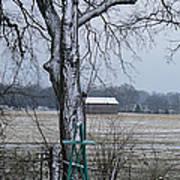 Backyard Panoramic Poster