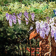 Backyard Wisteria Poster by Peter Sit