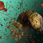 Bacteriophage Viruses Poster by Karsten Schneider