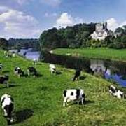 Ballyhooley, Co Cork, Ireland Friesian Poster
