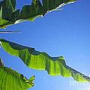 Banana Leaf In The Sky Poster