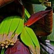 Banana Plant I Poster