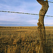 Barbed Wire Fence Along Dry Creek Road Poster