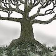 Bare Branches I Poster