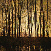 Fall Trees On A Lake Poster