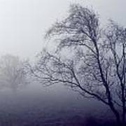 Bare Trees In Thick Fog, Peak District Poster
