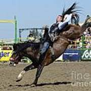 Rodeo Bareback Riding Poster