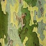 Bark Of A Sycamore Tree Poster