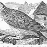 Barn Owl, 1877 Poster