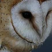 Barn Owl Closeup Poster