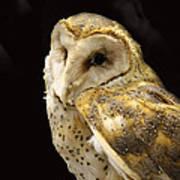 Barn Owl In A Dark Tree Poster