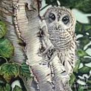 Barred Owl II Poster