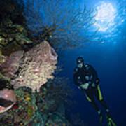 Barrel Sponge And Diver, Belize Poster