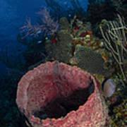 Barrel Sponge Seascape, Belize Poster